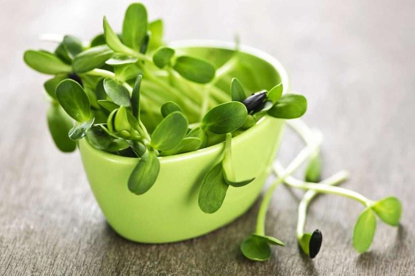 Kiełki lucerny są bogate w łatwo przyswajalne białko /123RF/PICSEL