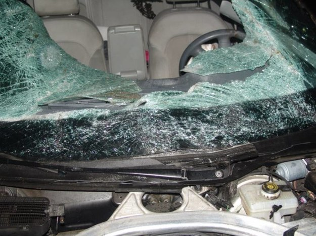 Kierowca audi potrącił jedno ze zwierząt /Policja