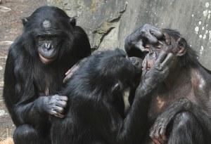 Kilka mitów na temat teorii ewolucji