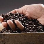 Kilka rzeczy, których nikt nie powie ci o kawie