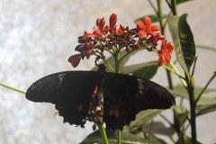 Kilkaset motyli na wystawie w Waszyngtonie
