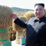 Kim Dzong Un wydał dramatyczny rozkaz. Chodzi o oddanie psów do restauracji!