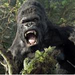 King Kong naprawdę istniał. Ale jego śmierć nie była filmowa