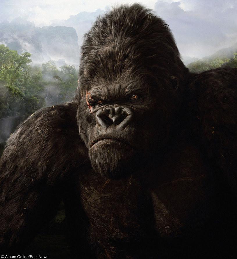 King Kong /East News