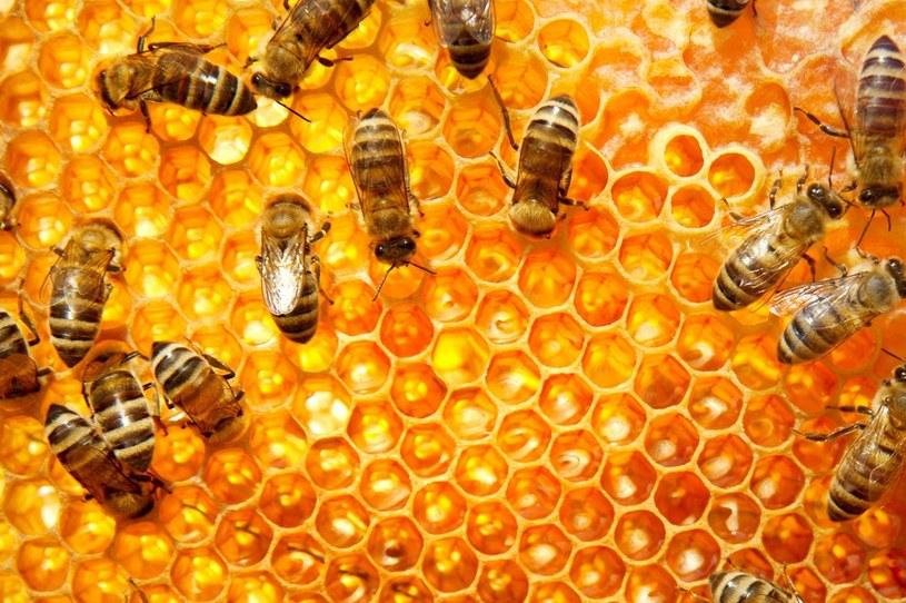 kit pszczeli działanie /© Photogenica