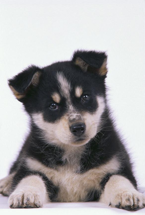 kleszcz na psie /© Photogenica