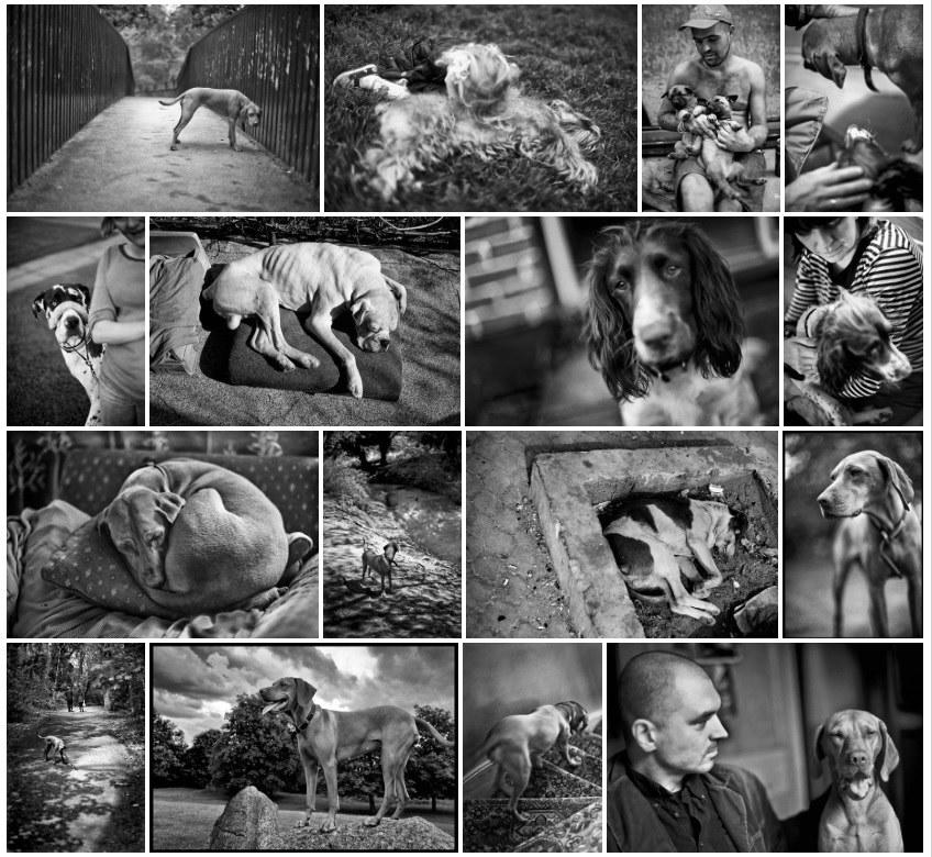 Kliknij w obrazek, aby zobaczyć więcej zdjęć Bogdana Frymorgena /Bogdan Frymorgen /