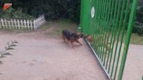 Kłotnia dwóch psów. Nie wiedzieli o jednym