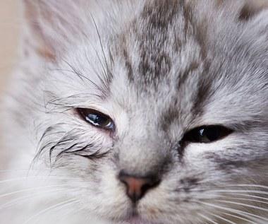 Koci katar: Przyczyny, objawy i leczenie