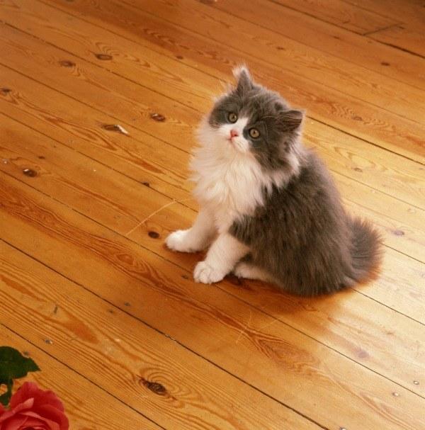 Koci mocz czyszczenie /© Photogenica