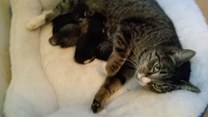 Kocia mama czule opiekuje się swoimi pociechami