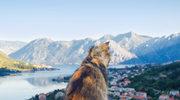 Kocia mekka na wybrzeżu Adriatyku