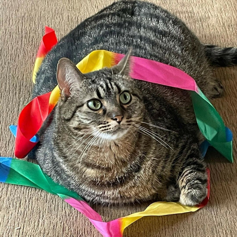 Kociak jest piękny, ale jego zdrowie trzeba monitorować /East News