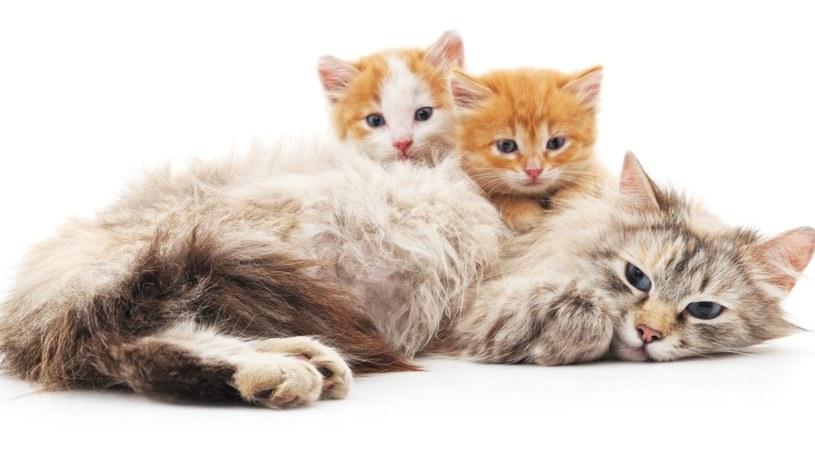 Kociaki to duża radość /©123RF/PICSEL