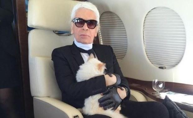 """Kocica spadkobierczynią Karla Lagerfelda? """"Nie bójcie się, starczy dla każdego"""""""