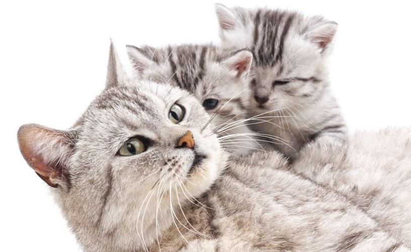 Kocięta lubią wybryki /©123RF/PICSEL