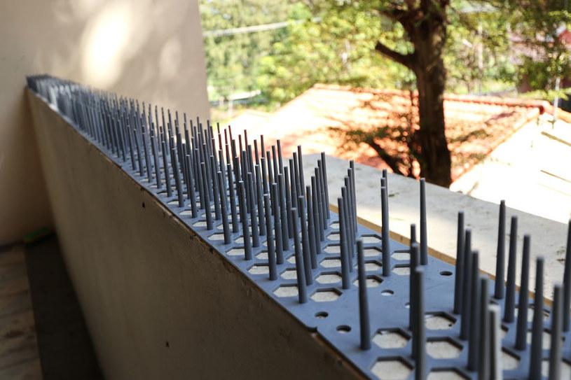 Kolce na balkonie /©123RF/PICSEL