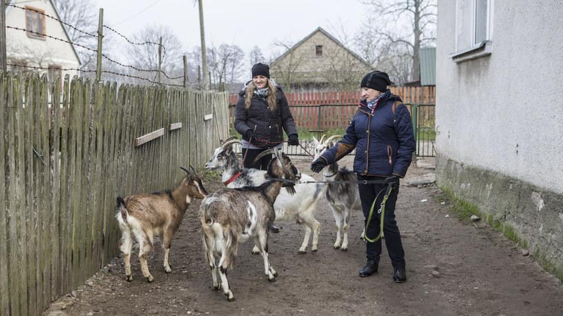Kolejne kozy pojawią się w gospodarstwie /FOKUS TV
