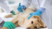 Kolejne ofiary tajemniczej psiej choroby