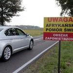 Kolejne przypadki ASF u dzików w pobliżu Warszawy