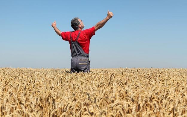 Kolejny rok wspierania ubezpieczeń upraw rolnych z podatków nas wszystkich /©123RF/PICSEL