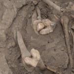 """Koło Kielc odnaleziono szczątki czterech osób. """"Ewidentnie możemy mówić o egzekucji komunistycznej"""""""