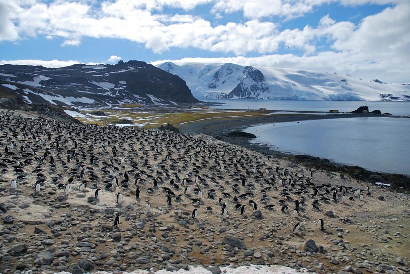 Kolonia pingwinów; w tle Polska Stacja Antarktyczna; fot. PIOTR ANGIEL /East News