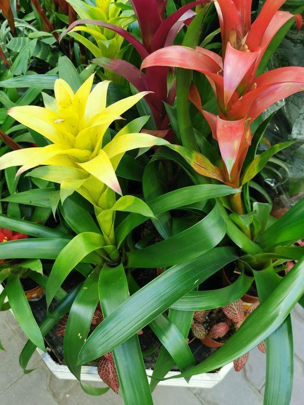 Kolorowe kwiatostany /©123RF/PICSEL
