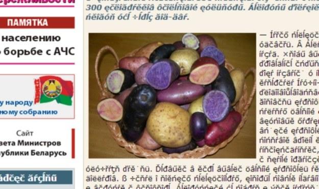 Kolorowe ziemniaki wyhodowane przez białoruskich naukowców /belniva.by /INTERIA.PL