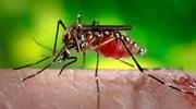 Komar i tak cię dopadnie