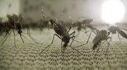 Komar - śmiertelny wróg człowieka