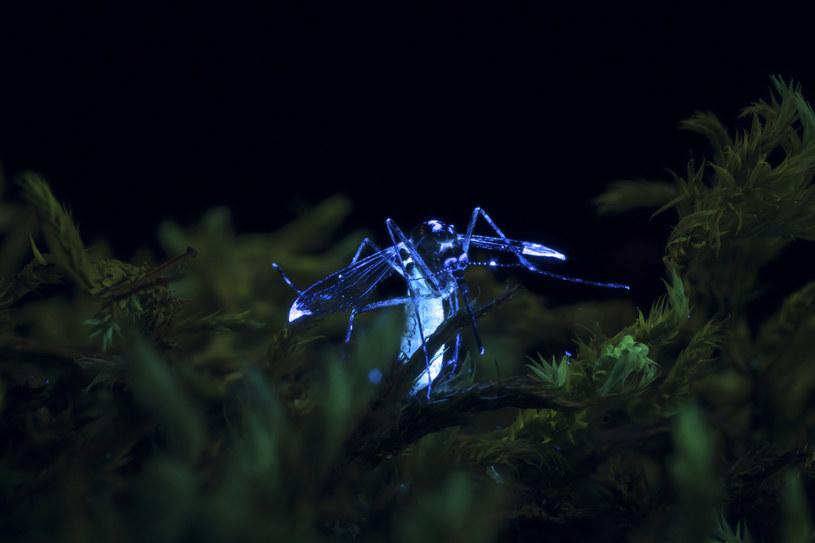 Komary coraz częściej pojawiają się tam, gdzie jeszcze kilka lat temu w ogóle ich nie było /materiały prasowe