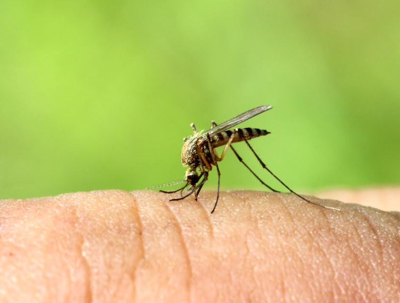 Komary często atakują kobiety w ciąży i osoby o masywnej sylwetce /123RF/PICSEL
