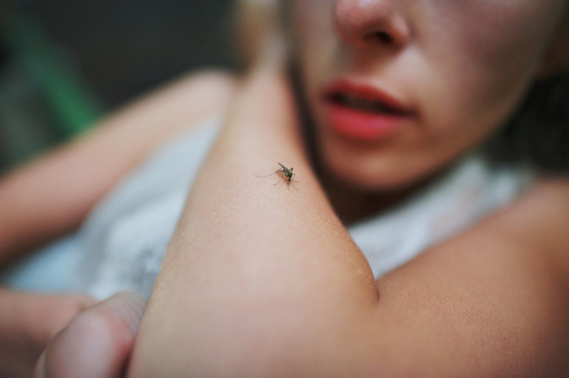 Komary niektórych ludzi gryzą częściej niż innych /123RF/PICSEL