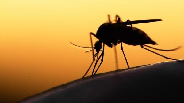 komary odstraszanie /© Photogenica