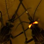 Komary pod kontrolą? Rosną szansę na skuteczną walkę z groźną chorobą