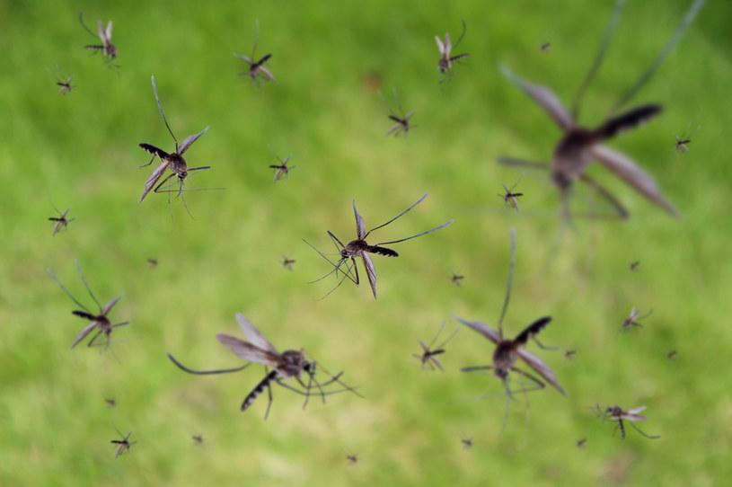 Komary przenoszą m.in. wirusa Zika oraz choroby takie jak malaria czy denga /123RF/PICSEL