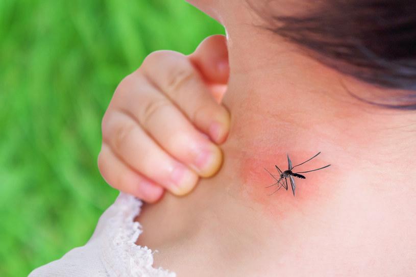 Komary przyciąga pot /123RF/PICSEL
