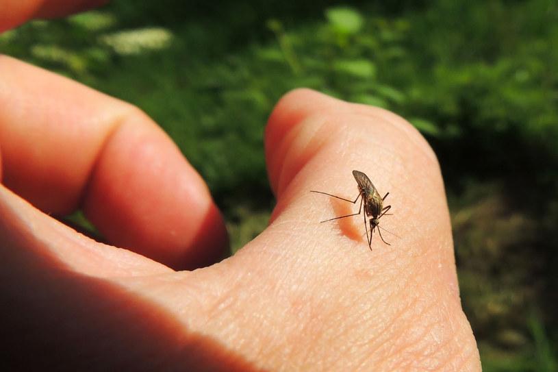Komary są bardzo uciążliwe w tym sezonie /123RF/PICSEL
