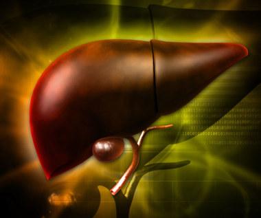 Komórki macierzyste z migdałków odbudują wątrobę