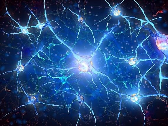 Komórki nerwowe /© Photogenica