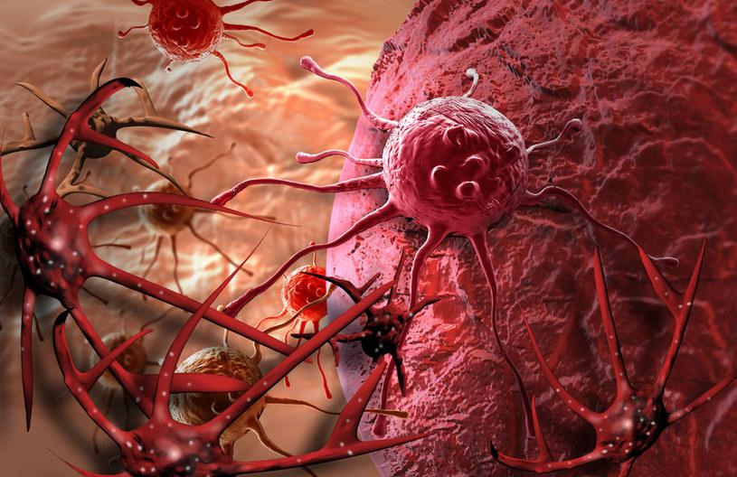 Komórki nowotworowe mogą ze sobą współpracować. Ta cecha decyduje o ich odporności na leczenie /123RF/PICSEL
