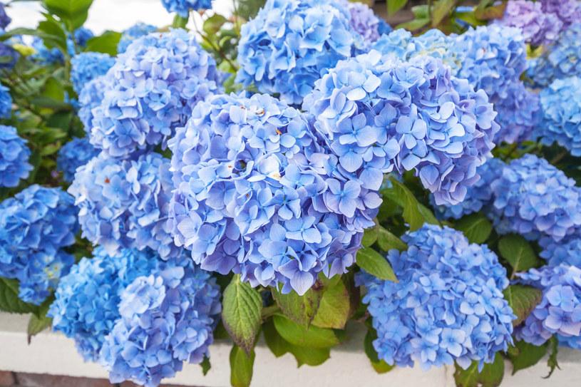 Kompost lub obornik to doskonała odżywka dla kwiatów /123RF/PICSEL