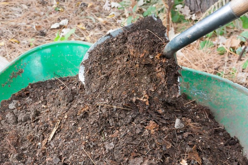 Kompost warto mieszać z ziemią znajdującą się w ogrodzie /123RF/PICSEL