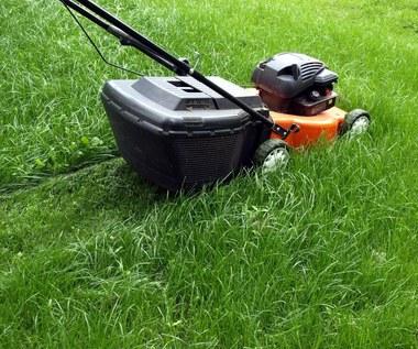 Kompost z trawy: Jak zrobić i do czego wykorzystać?
