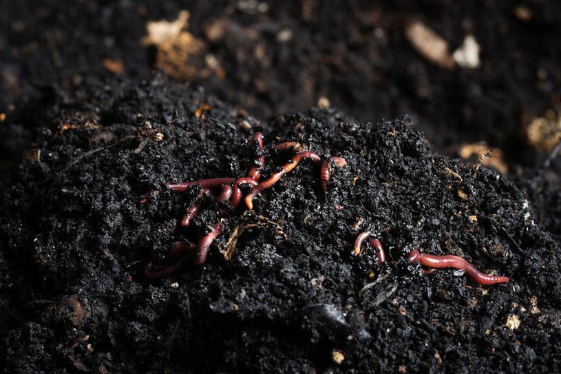 Kompost z trawy jest gotowy, gdy nie ma w nich dżdżownic