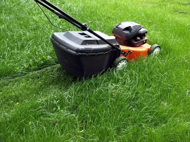 Kompost z trawy nie jest trudny do stworzenia /123RF/PICSEL