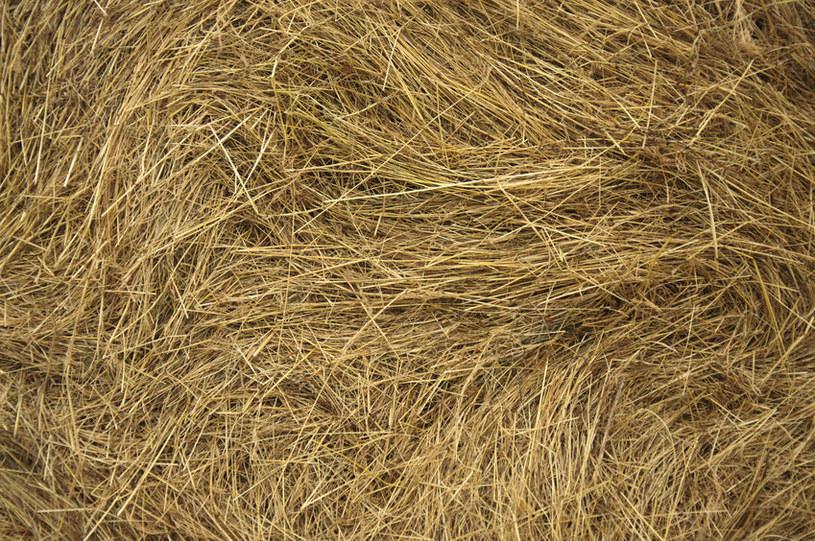 Kompost z trawy powinien mieć warstwy: suchą i mokrą