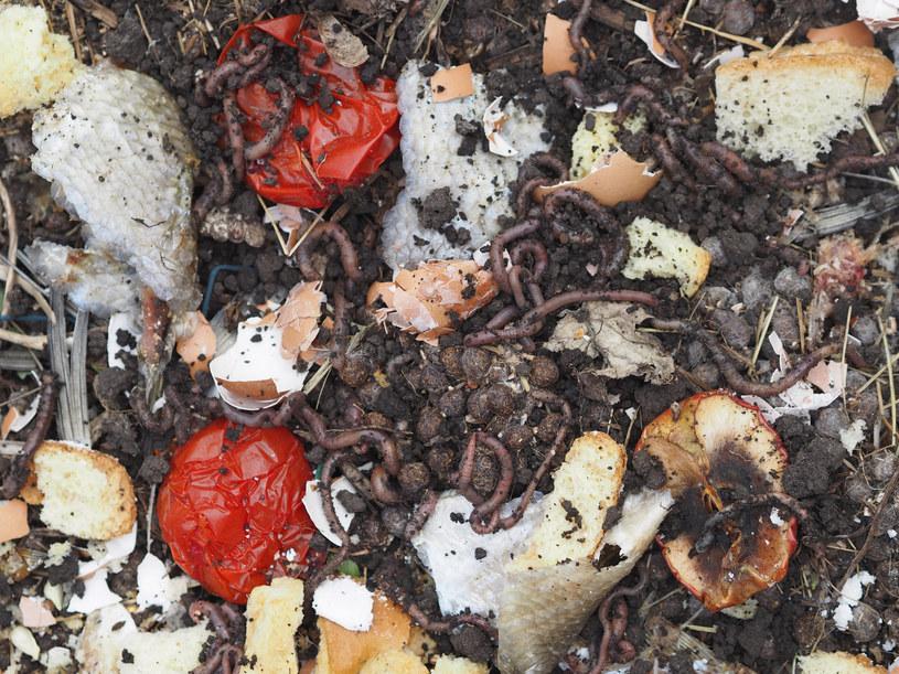 Kompostować możemy obierki z warzyw i owoców, woreczki z herbatą, fusy po kawie czy resztki ugotowanych warzyw /123RF/PICSEL