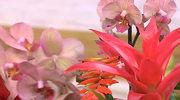 Kompozycje z kwiatów